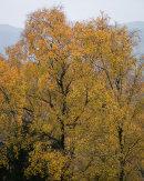 Golden Splendour, Whitbarrow