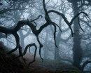 Gothic Wood
