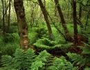 Woodland, Heysham Moss