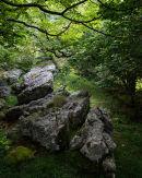 Limestone Shelf, Hazel Coppice