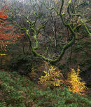 High Shores Clough 02