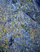 Lichen, Castle Crag