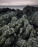 Lichen Encrusted Rocks, Imachar, Arran
