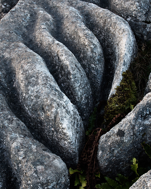 Limestone Detail 03, Gauber Rocks