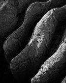 Limestone Detail, Grange Scar