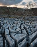 Limestone Pavement & Ash Tree
