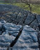 Limestone Terrace, Newbiggin Crags