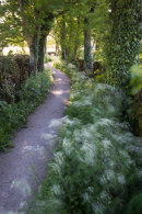 Lost Lanes of Queen Anne's Lace