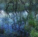 Wetland, Derwent Water