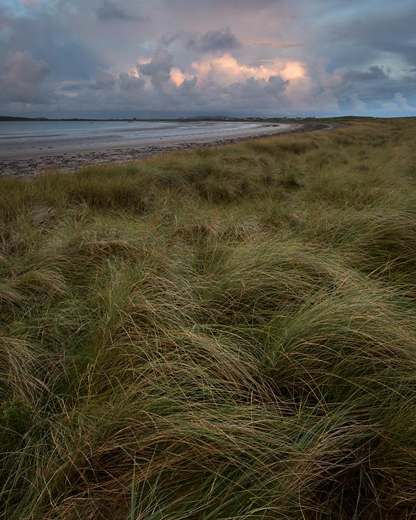 Marram Grass, Gott Bay, Isle of Tiree
