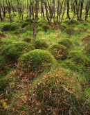Mossy Mounds