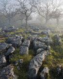 Morning Mist, Oxenber