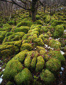 Moss covered limestone, Oxenber