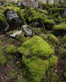 Mossy Boulders, Hutton Roof