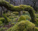 Moss Tree, Oxenber