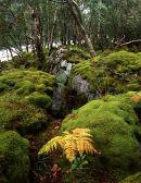 Mossy boulders, Gruinard