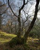 Murthwaite Wood
