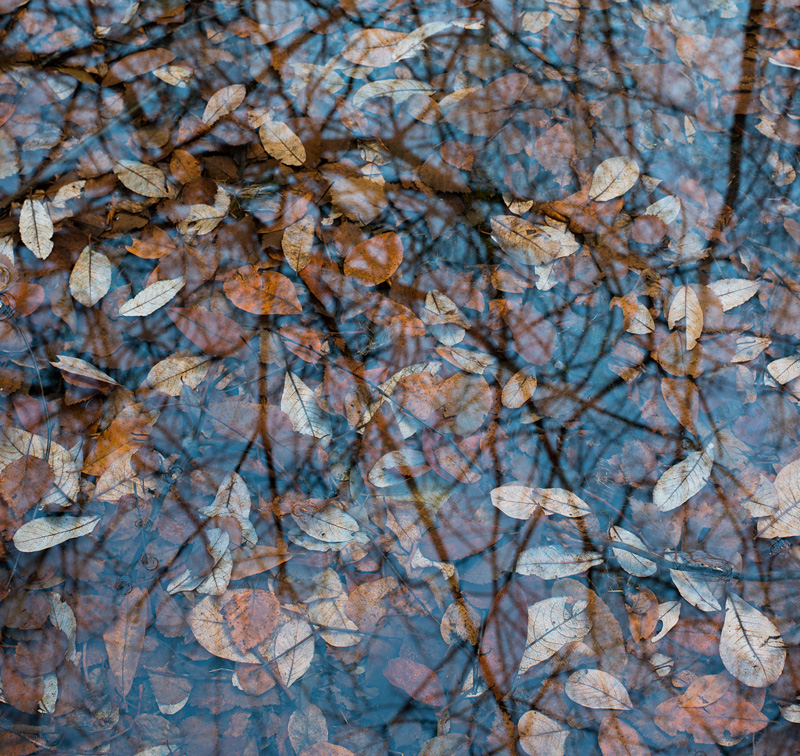 Submerged Leaves, Cox Green Quarry