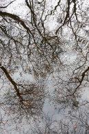 Reflections, Wayoh, 03