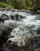 River Dog, Eagley Brook