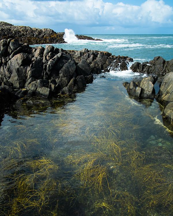 Rockpool, Isle of Tiree