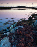 Ruival from Flodday Bay, Benbecula