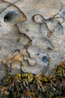 Sandstone Squiggles