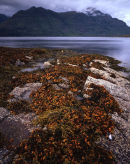 Seaweed & Liathach