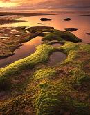 Seaweed, Sunset, Budle Bay