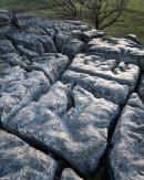 Silvery Limestone, Newbiggin Crags