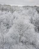 Snowfall, Cox Green Quarry