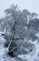 Winter, Below Turton Heights, 02
