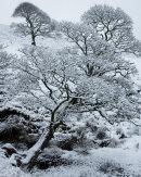 Winter, Below Turton Heights, 01
