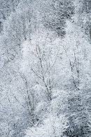 Snowy Woodland, Cox Green Quarry 06