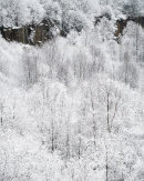 Snowy Woodland, Cox Green Quarry 07