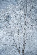 Snowy Woodland, Cox Green Quarry 01