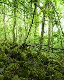 Spring, Eaves Wood
