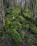 Strickland Wood
