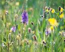Summer Meadow, Langstrothdale