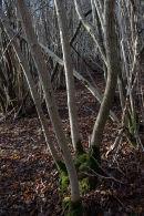 Sunlit Coppice, Arnside Knott Wood