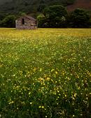 Meadow and barn, Swaledale, Yorkshire Dales