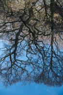 Tree Reflections, Roddlesworth, 01