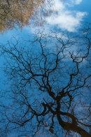 Tree Reflections, Roddlesworth, 02