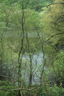 Woodland, Wayoh