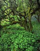 Twisted Tree and Dogs Mercury, Wharfe Woods