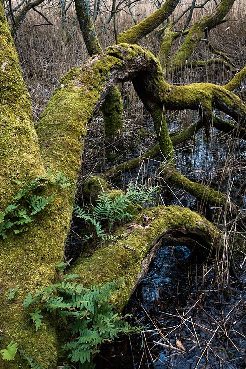 Wetland, Leighton Moss