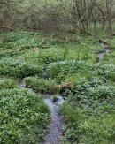Wetland, Longworth Clough