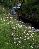 Wildflowers, Gayle Beck