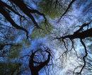 Wind, Canopy, Sky 011