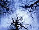 Wind, Canopy, Sky 02